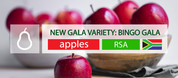 A new Gala variety was produced in RSA: Cherry Red Bingo Gala.