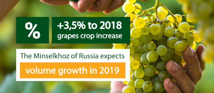 The Minselkhoz of Russia expects the 3,5% more grapes crop in 2019.