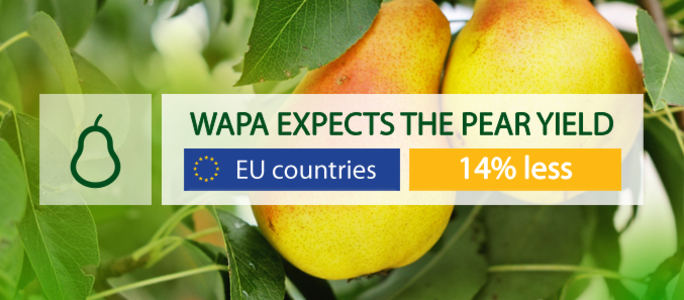 WAPA: EU growers expect to harvest 14% less pears in 2019.