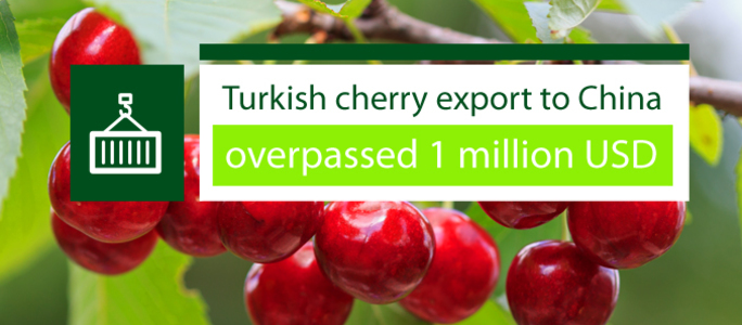 Turkish cherry export to China overpassed 1 million USD.